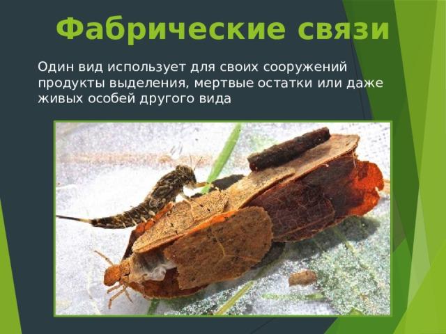 Фабрические связи Один вид использует для своих сооружений продукты выделения, мертвые остатки или даже живых особей другого вида