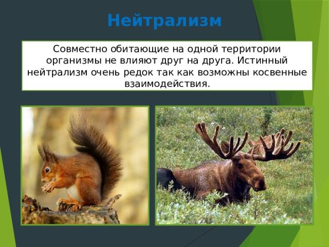 Нейтрализм Совместно обитающие на одной территории организмы не влияют друг на друга. Истинный нейтрализм очень редок так как возможны косвенные взаимодействия.