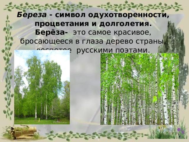 Береза - символодухотворенности, процветания идолголетия.  Берёза- это самое красивое, бросающееся в глаза дерево страны, воспетое русскими поэтами.