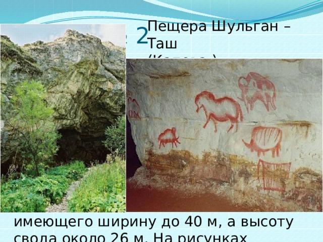 вопрос № 2 Пещера Шульган – Таш (Капова ) Эту пещеру начали изучать с 18 века. Однако всемирную известность она получила с 1959 г. после находки в ней наскальных рисунков людей позднего палеолита, живших 40 – 10 тысяч лет до нашей эры. Рисунки находятся высоко на стенах зала, имеющего ширину до 40 м, а высоту свода около 26 м. На рисунках изображены фигуры дикой лошади, мамонтов и носорога.