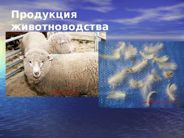 Продукция животноводства www . fermer02.ru www.sweetdreams.com.ua