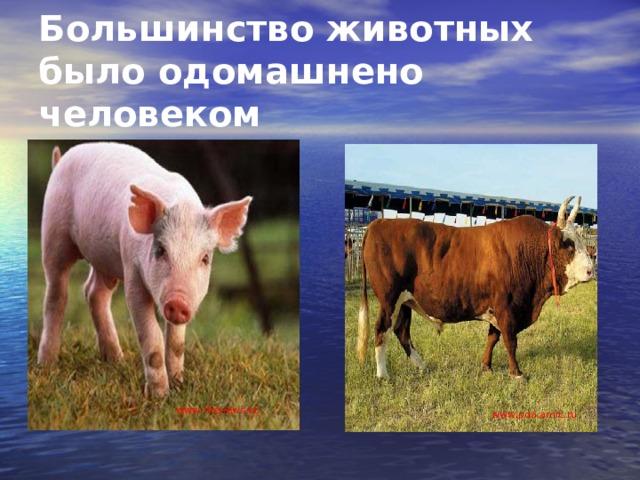 Большинство животных было одомашнено человеком www . thenews.kz www . pda.amic.ru