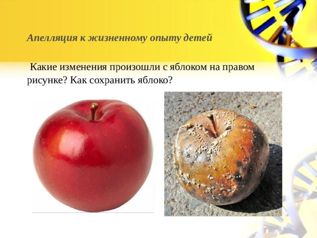 Апелляция к жизненному опыту детей    Какие изменения произошли с яблоком на правом рисунке? Как сохранить яблоко?
