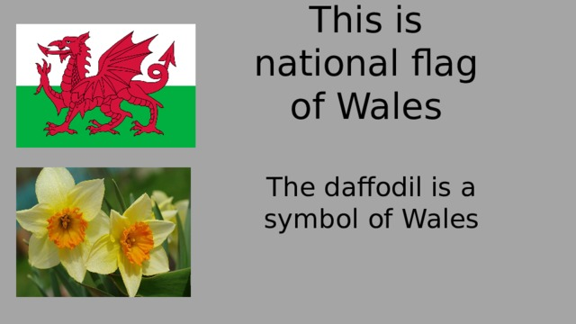 This is national flag of Wales The daffodil is a symbol of Wales