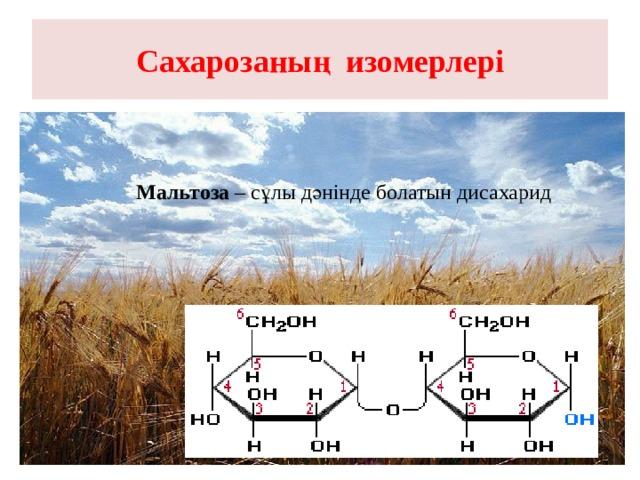 Сахарозаның изомерлері Мальтоза – сұлы дәнінде болатын дисахарид