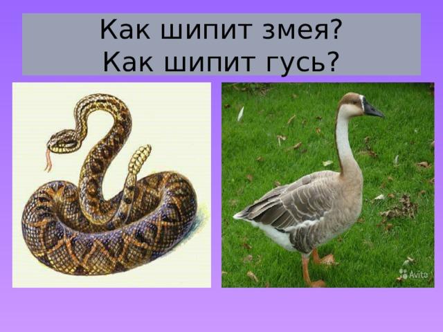 Как шипит змея?  Как шипит гусь?