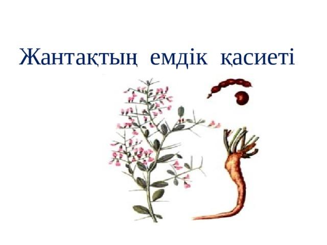 Жантақтың емдік қасиеті