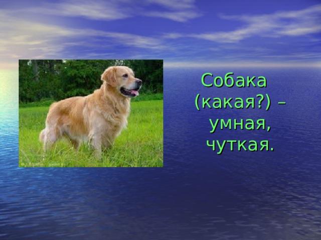 Собака (какая?) – умная, чуткая.