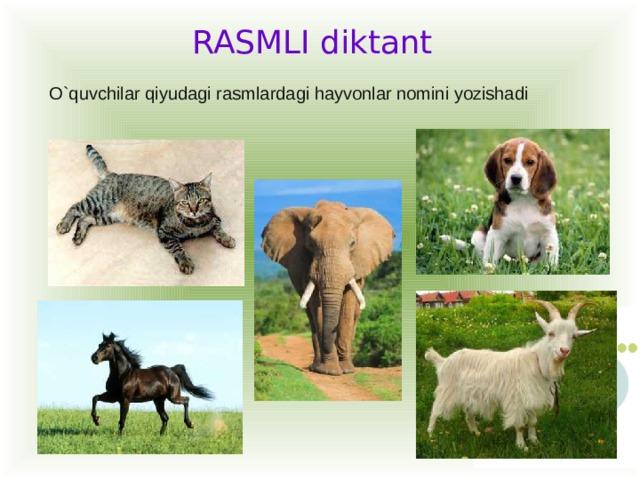 RASMLI diktant O`quvchilar qiyudagi rasmlardagi hayvonlar nomini yozishadi