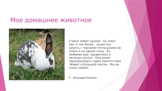 Мое домашнее животное У меня живет кролик . Ее зовут Зая. У нее белая , пушистая шерсть с черными пятнышками на спине и на одном глазу . Ее любимая еда- одуванчики и овсяные хлопья . Она умеет перепрыгивать через препятствия. Живет в большой клетке . Мы ее очень любим.