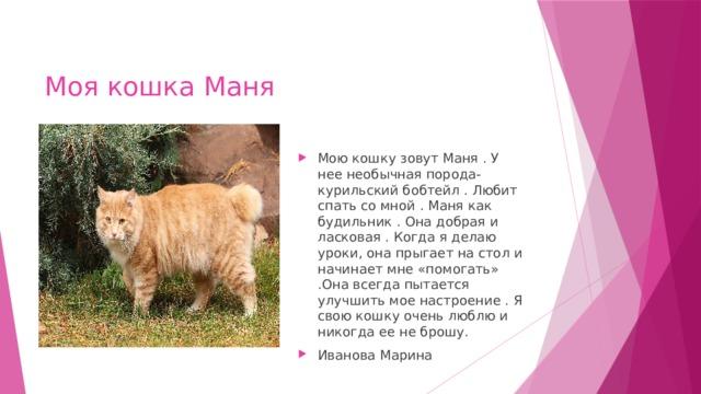 Моя кошка Маня