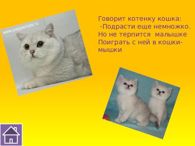 Говорит котенку кошка:  -Подрасти еще немножко. Но не терпится малышке Поиграть с ней в кошки-мышки
