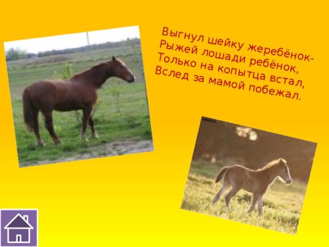 Выгнул шейку жеребёнок- Рыжей лошади ребёнок, Только на копытца встал, Вслед за мамой побежал.
