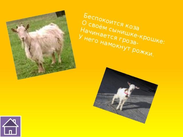 Беспокоится коза О своём сынишке-крошке: Начинается гроза- У него намокнут рожки.