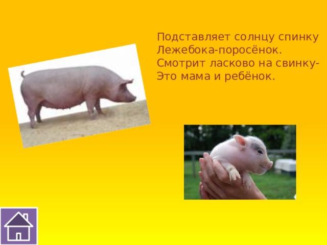 Подставляет солнцу спинку Лежебока-поросёнок. Смотрит ласково на свинку- Это мама и ребёнок.