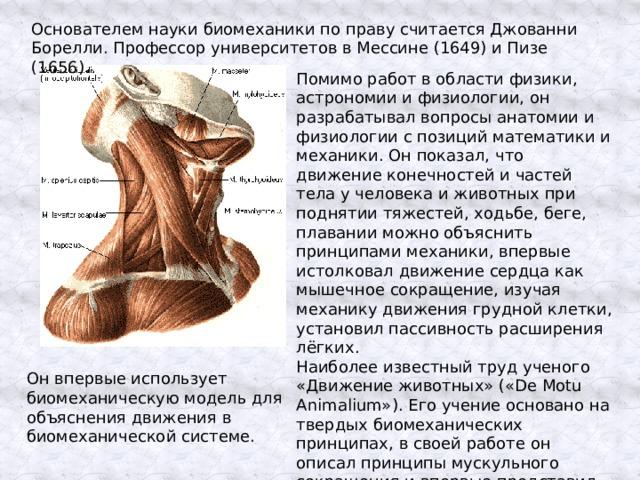 Основателем науки биомеханики по праву считается Джованни Борелли. Профессор университетов в Мессине (1649) и Пизе (1656). Помимо работ в области физики, астрономии и физиологии, он разрабатывал вопросы анатомии и физиологии с позиций математики и механики. Он показал, что движение конечностей и частей тела у человека и животных при поднятии тяжестей, ходьбе, беге, плавании можно объяснить принципами механики, впервые истолковал движение сердца как мышечное сокращение, изучая механику движения грудной клетки, установил пассивность расширения лёгких. Наиболее известный труд ученого «Движение животных» («Dе Motu Animalium»). Его учение основано на твердых биомеханических принципах, в своей работе он описал принципы мускульного сокращения и впервые представил математические схемы движения Он впервые использует биомеханическую модель для объяснения движения в биомеханической системе.