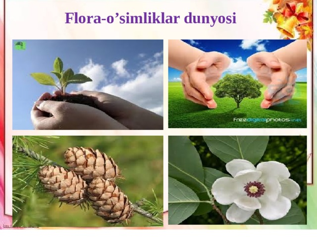 Flora-o'simliklar dunyosi Педагогика нима? Нима билан шуғулланади? Нималарни тадқиқ қилади?-