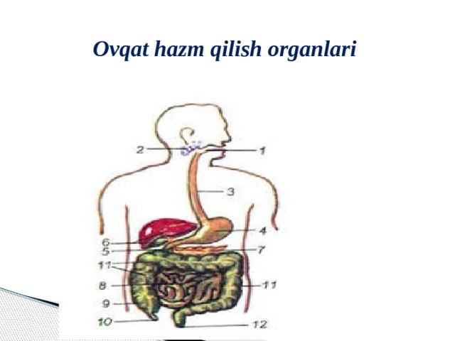 Ovqat hazm qilish organlari