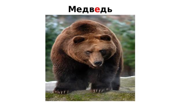 Медв е дь