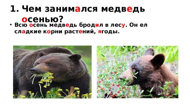 Чем заним а лся медв е дь о сенью? Всю о сень медв е дь брод и л в лес у . Он ел сл а дкие к о рни раст е ний, я годы.