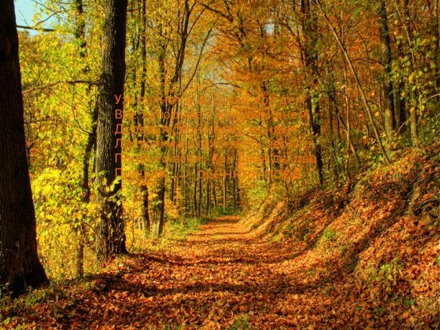 Уж пахнет в воздухе дождем,  Все холоднее с каждым днем.  Деревья свой наряд меняют,  Листочки потихонечку теряют.  Понятно всем, как дважды два -  Пришла …   осенняя пора.