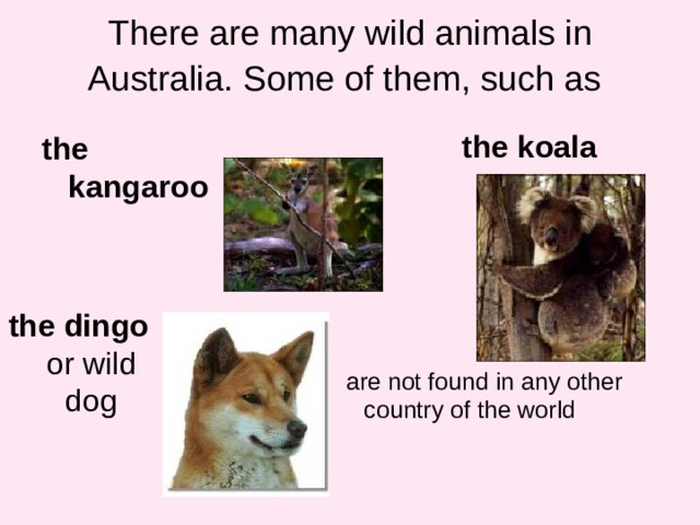 There are many wild animals in Australia. Some of them, such as  the  koala the  kangaroo the  dingo or wild dog are not found in any other country of the world