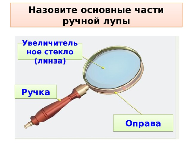 Назовите основные части ручной лупы Увеличительное стекло (линза) Ручка Оправа