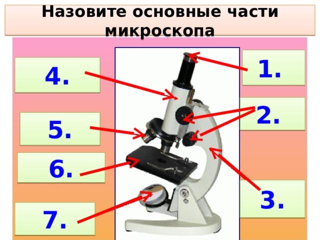 Назовите основные части микроскопа 1. 4. 2. 5. 6. 3. 7.