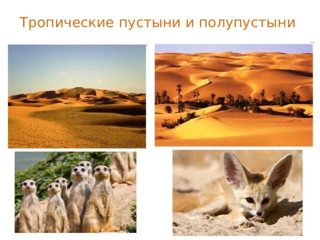 Тропические пустыни и полупустыни