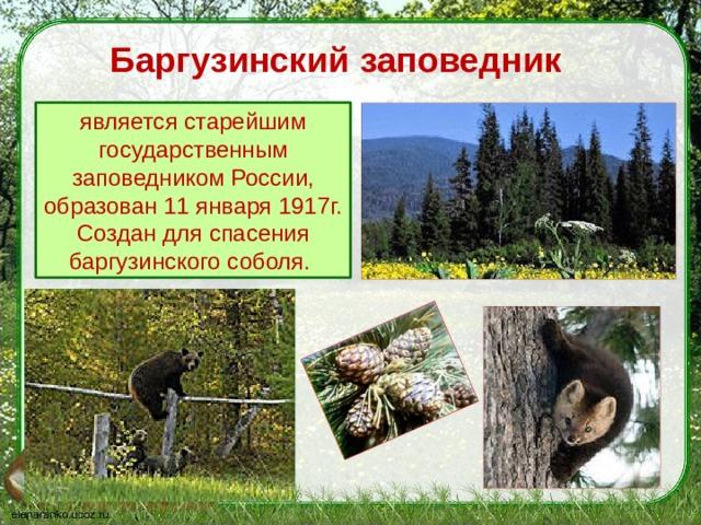 Баргузинский заповедник является старейшим государственным заповедником России, образован 11 января 1917г.  Создан для спасения баргузинского соболя.