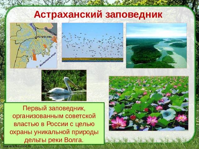 Астраханский заповедник Первый заповедник, организованным советской властью в России с целью охраны уникальной природы дельты реки Волга.