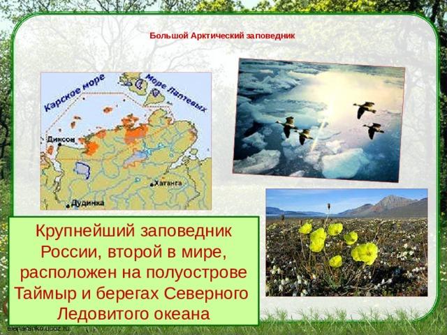 Большой Арктический заповедник   Крупнейший заповедник России, второй в мире, расположен на полуострове Таймыр и берегах Северного Ледовитого океана