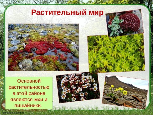 Растительный мир Основной растительностью в этой районе являются мхи и лишайники.