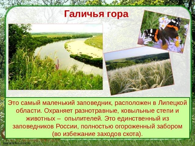 Галичья гора Это самый маленький заповедник, расположен в Липецкой области. Охраняет разнотравные, ковыльные степи и животных – опылителей.  Это единственный из заповедников России, полностью огороженный забором (во избежание заходов скота).