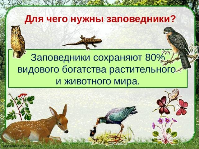 Для чего нужны заповедники?   Заповедники сохраняют 80% видового богатства растительного и животного мира.