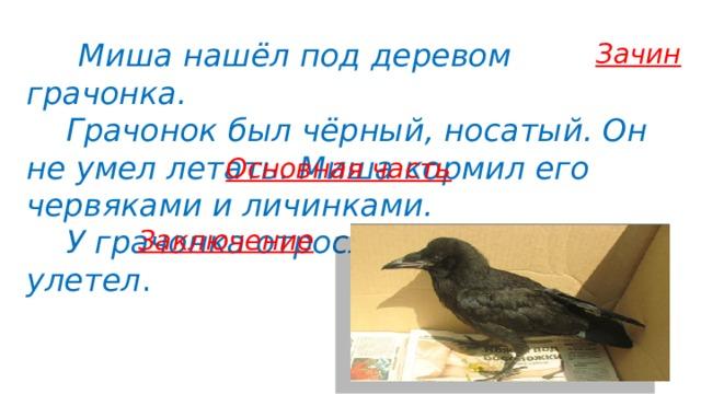 Миша нашёл под деревом грачонка.  Грачонок был чёрный, носатый. Он не умел летать. Миша кормил его червяками и личинками.  У грачонка отросли крылья, и он улетел . Зачин Основная часть Заключение 9