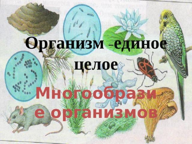 Организм – единое целое Многообразие организмов