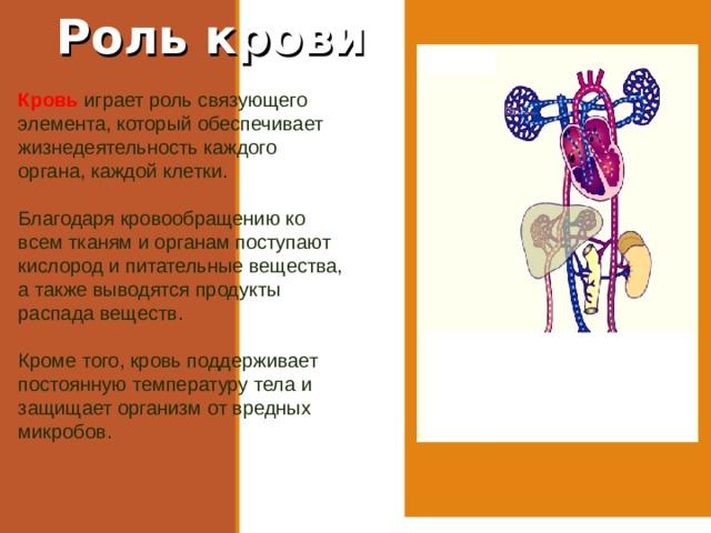 Роль крови Кровь играет роль связующего элемента, который обеспечивает жизнедеятельность каждого органа, каждой клетки. Благодаря кровообращению ко всем тканям и органам поступают кислород и питательные вещества, а также выводятся продукты распада веществ. Кроме того, кровь поддерживает постоянную температуру тела и защищает организм от вредных микробов.