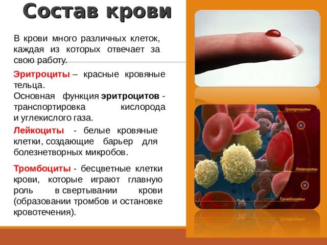 Состав крови В крови много различных клеток, каждая из которых отвечает за свою работу. Эритроциты – красные кровяные тельца. Основная функция эритроцитов - транспортировка кислорода иуглекислого газа. Лейкоциты  - белые кровяные клетки,создающие барьер для болезнетворных микробов. Тромбоциты - бесцветные клетки крови, которые играют главную роль всвертывании крови (образовании тромбов и остановке кровотечения).