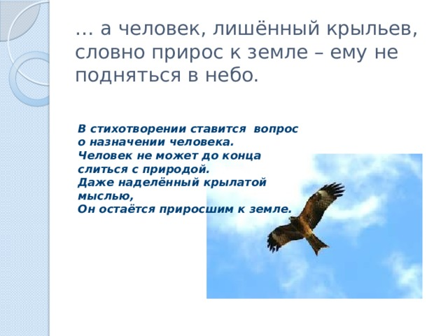 … а человек, лишённый крыльев, словно прирос к земле – ему не подняться в небо. В стихотворении ставится вопрос о назначении человека. Человек не может до конца слиться с природой. Даже наделённый крылатой мыслью, Он остаётся приросшим к земле.