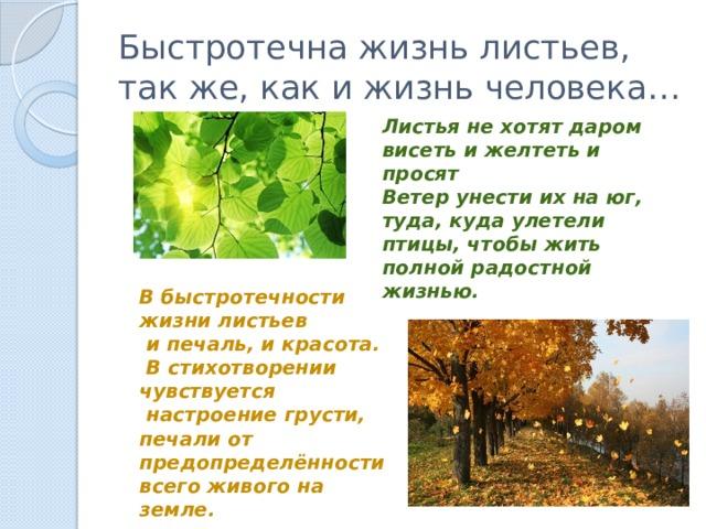 Быстротечна жизнь листьев, так же, как и жизнь человека… Листья не хотят даром висеть и желтеть и просят Ветер унести их на юг, туда, куда улетели птицы, чтобы жить полной радостной жизнью. В быстротечности жизни листьев  и печаль, и красота.  В стихотворении чувствуется  настроение грусти, печали от предопределённости всего живого на земле.
