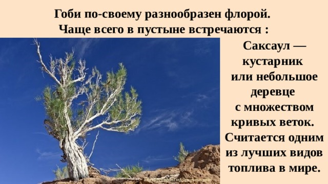 Гоби по-своему разнообразен флорой.  Чаще всего в пустыне встречаются : Саксаул— кустарник или небольшое деревце  с множеством кривых веток.  Считается одним из лучших видов топлива в мире.
