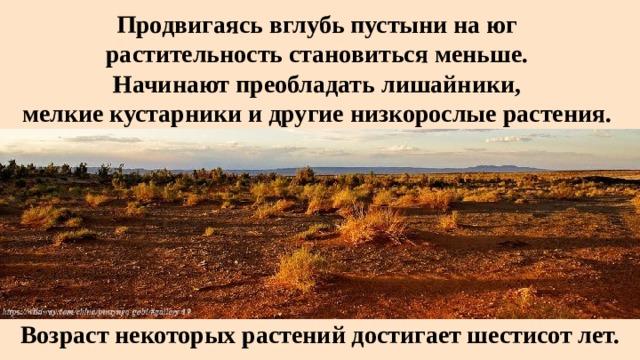 Продвигаясь вглубь пустыни на юг  растительность становиться меньше.  Начинают преобладать лишайники,  мелкие кустарники и другие низкорослые растения. Возраст некоторых растений достигает шестисот лет.