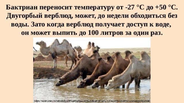 Бактриан переносит температуру от -27 °C до +50 °C. Двугорбый верблюд, может, до недели обходиться без воды. Зато когда верблюд получает доступ к воде,  он может выпить до 100 литров за один раз.