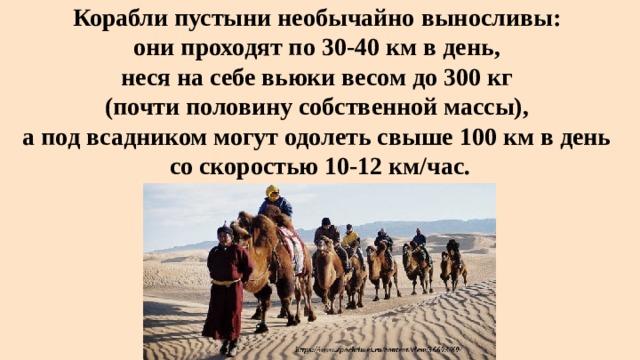 Корабли пустыни необычайно выносливы:  они проходят по 30-40 км в день,  неся на себе вьюки весом до 300 кг  (почти половину собственной массы),  а под всадником могут одолеть свыше 100 км в день  со скоростью 10-12 км/час.