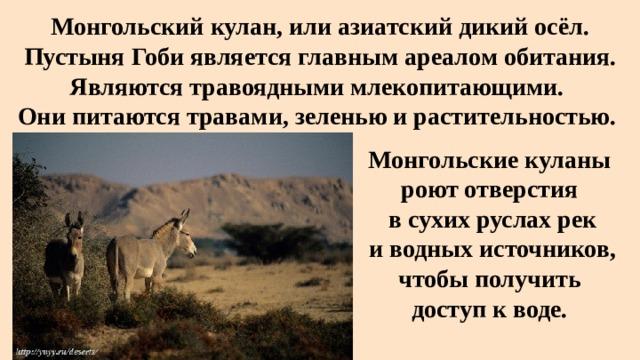 Монгольский кулан, или азиатский дикий осёл. Пустыня Гобиявляется главным ареалом обитания. Являются травоядными млекопитающими.  Они питаются травами, зеленью и растительностью. Монгольские куланы роют отверстия  в сухих руслах рек  и водных источников,  чтобы получить доступ к воде.