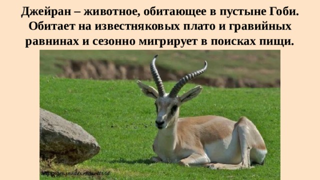 Джейран – животное, обитающее в пустыне Гоби. Обитает на известняковых плато и гравийных равнинах и сезонно мигрирует в поисках пищи.