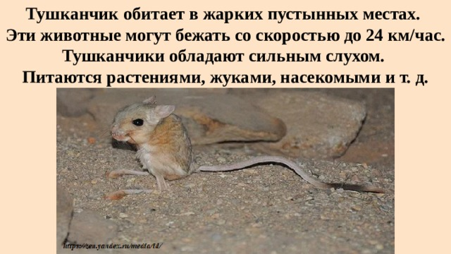 Тушканчик обитает в жарких пустынных местах.  Эти животные могут бежать со скоростью до 24 км/час. Тушканчики обладают сильным слухом.  Питаются растениями, жуками, насекомыми и т. д.