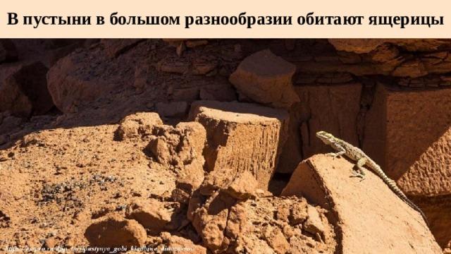 В пустыни в большом разнообразии обитают ящерицы