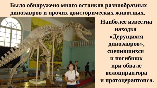 Было обнаружено много останков разнообразных динозавров и прочих доисторических животных. Наиболее известна находка «Дерущихся динозавров», сцепившихся и погибших  при обвале  велоцираптора  и протоцераптопса.